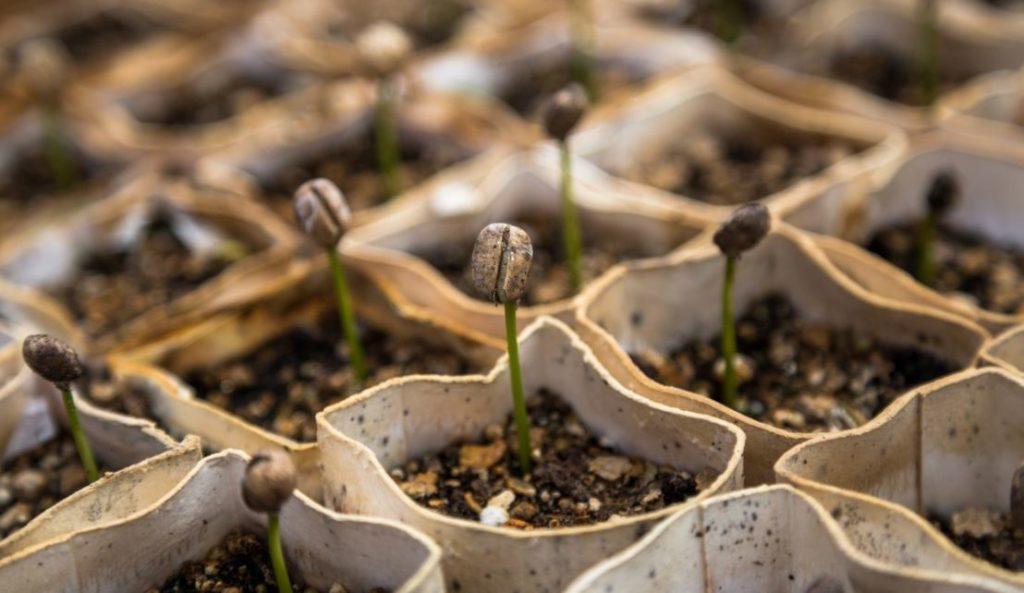 Jualan bibit tanaman dari rumah